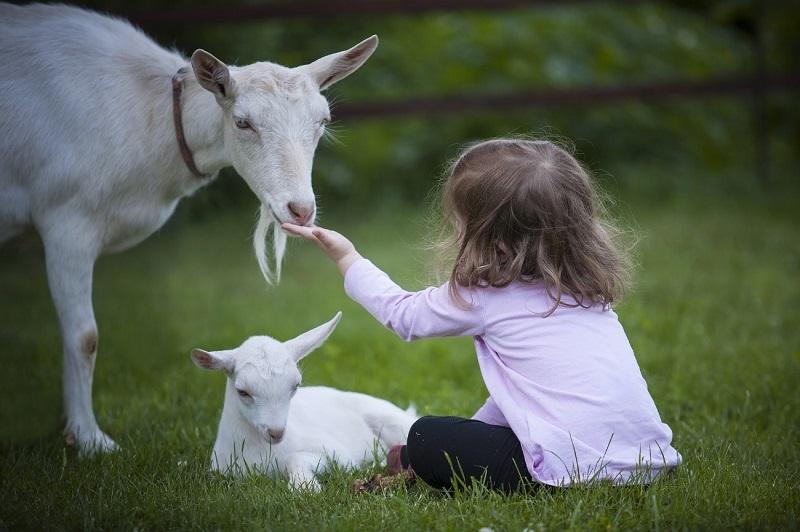 Beneficios de los animales para personas discapacitadas discapacidades