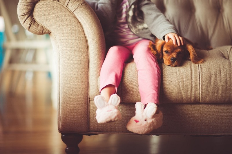 Beneficios de los animales para personas salud cuidad dsicapacidad miedo Beneficios de los animales para personas