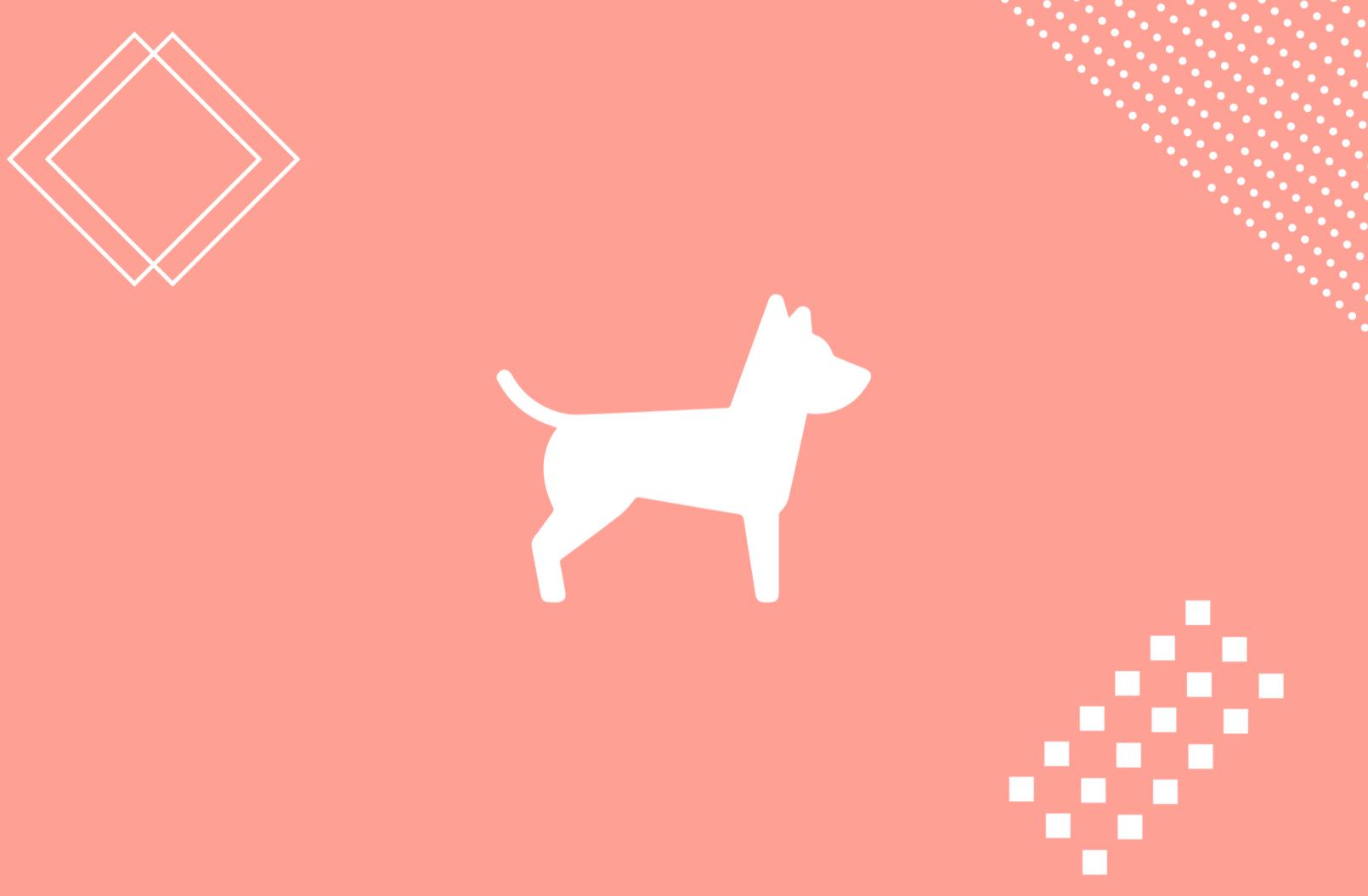 """La incorporación del concepto """"pet friendly en las empresas"""", pero ¿es lo mismo una mascota que un perro de asistencia?"""